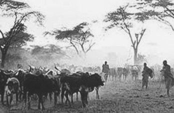 Cattle herding is a major economic activity for pastoralists